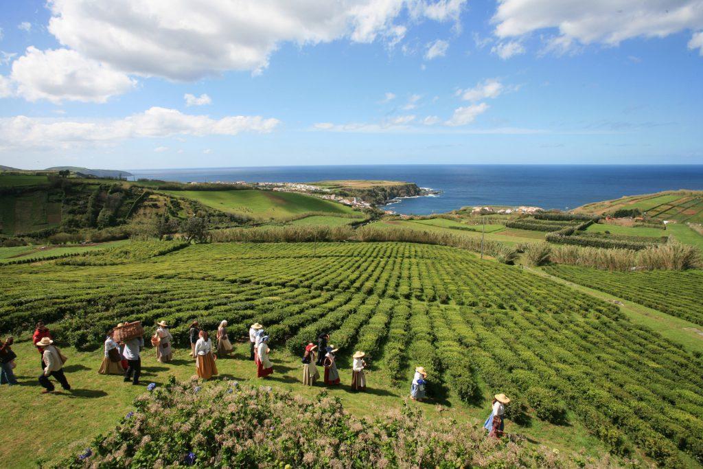 Plantações de chá de Porto Formoso